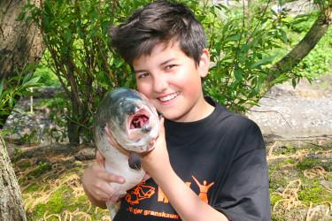 fiskmed